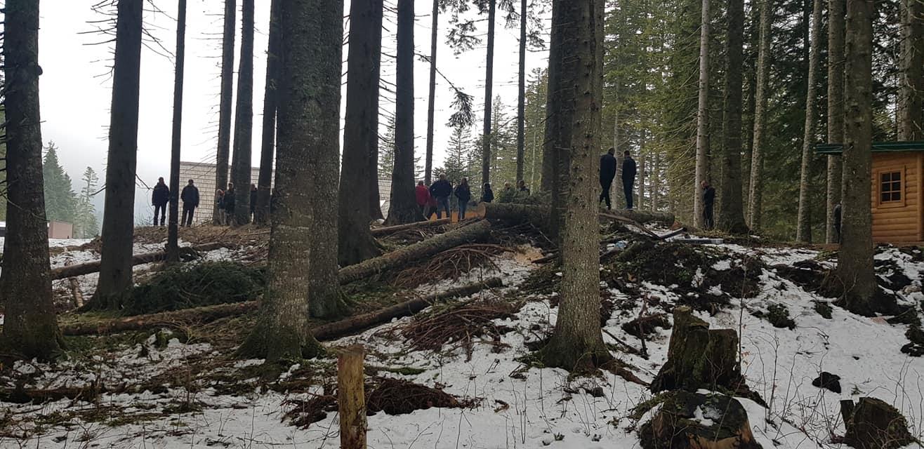 Posječena stabla